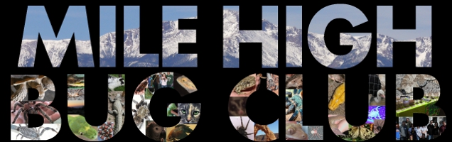Mile High Bug Club | The Rocky Mountain Area Exotic Animal Club - Powered by vBulletin
